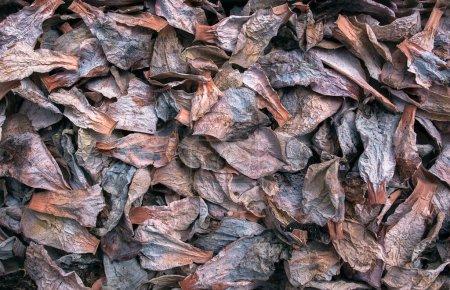 Photo pour Feuilles sèches de plantes succulentes, vue de dessus - image libre de droit