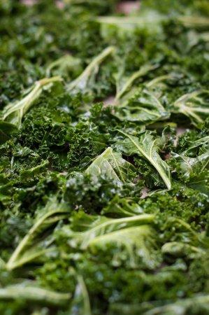 Photo pour Chou frisé vert et nutritif biologique préparé pour la cuisson et préparé pour de savoureuses croustilles de chou frisé recouvertes d'huile d'olive et de sel marin - image libre de droit