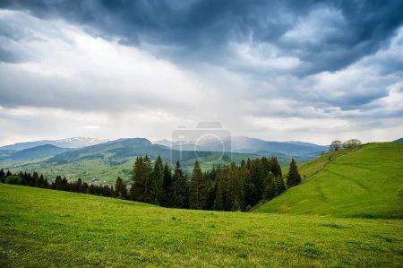 Photo pour Fond naturel d'été avec champ d'herbe verte fraîche - image libre de droit