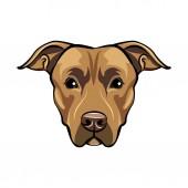 American staffordshire terrier portrait Cute dog Staffordshire terrier breed Vector