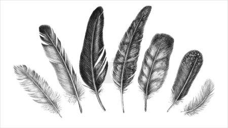Photo pour Plume à dessin à main levée. Illustration. Isolé sur fond blanc - image libre de droit