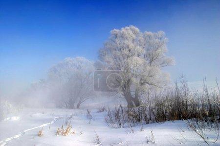 Photo pour Beaux paysages d'hiver par temps clair - image libre de droit