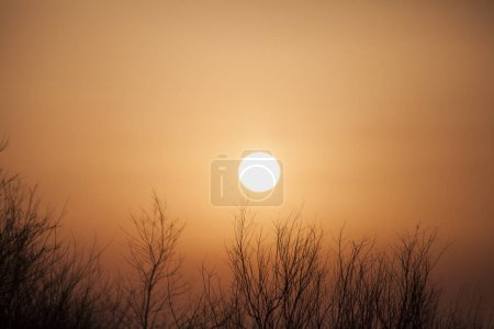 Photo for Beautiful orange sunset and forest in nature - Royalty Free Image