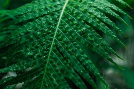 Detail view of fresh green tropical leaf