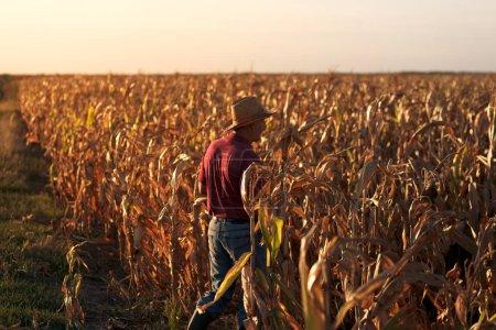 Senior farmer standing in corn field