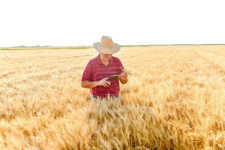 Photo for Senior farmer standing in a wheat field with a tablet - Royalty Free Image