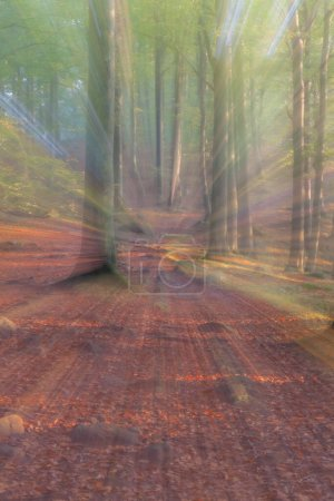 Photo for Abstract photo, forest in autumn photographed with different effects of motion and zoom. Colorful textured background. long shutter speed. - Royalty Free Image