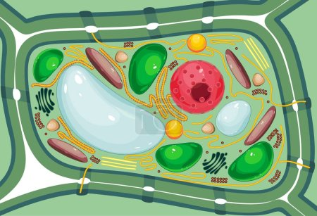 Structure of plant cell with different organelles...