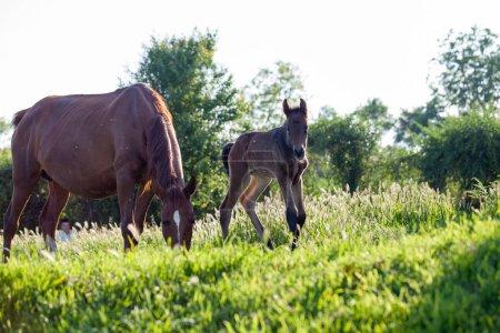 Photo pour Cheval mère et bébé dans le village - image libre de droit