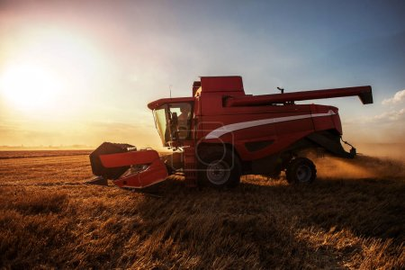 Photo for Combine harvesting the field of wheat on a sunset. - Royalty Free Image