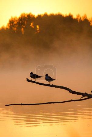 Photo pour Oiseaux sur la branche au-dessus du lac - image libre de droit