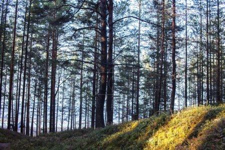 Photo pour Paysage extérieur saisonnier, automne doré forêt sauvage gros plan - image libre de droit