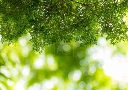 Photo pour Vert naturel floue bokeh avec fond de feuilles vertes - image libre de droit