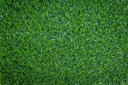 Photo for Green grass background, full frame foliage - Royalty Free Image