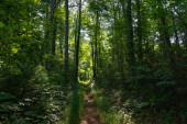 Smoky Mountains landscape along the trails.