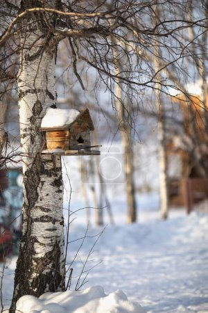 Birdhouse on tree on winter background. Snow forest of birch trees. Frozen wooden landscape.