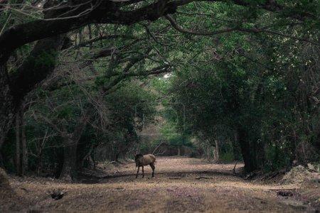 Photo pour R sur le terrain dans la forêt - image libre de droit
