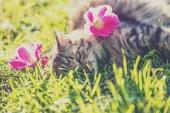 "Постер, картина, фотообои ""Кошка, лежа на траве в саду в летнее время с цветами на голове"""