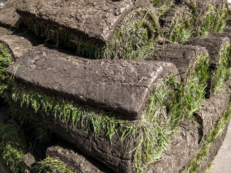 Stacking of roll green lawn grass