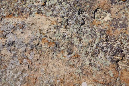 Photo for Surface of the stone with brown tint - Royalty Free Image