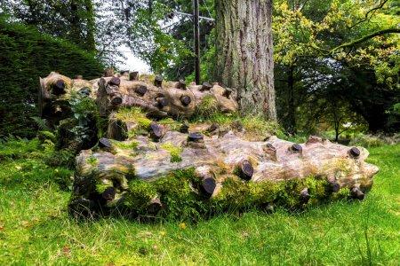 Photo pour Morceaux de bois pittoresque avec scié branches Benmore Botanic Garden, Loch Lomond et les Trossachs National Park, Écosse - image libre de droit