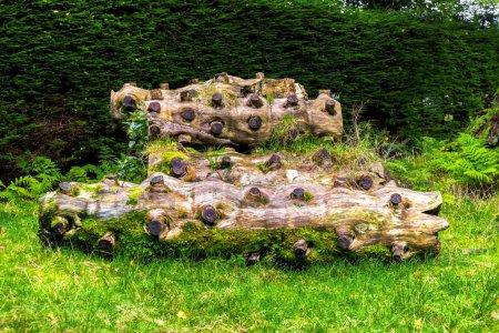 Photo pour Journaux scéniques avec plusieurs plat coupé les branches portant sur l'herbe verte dans le jardin botanique de Benmore, Loch Lomond et les Trossachs National Park, Écosse - image libre de droit