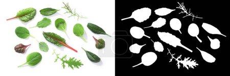 Photo pour Microgreens ou baby greens : Chard, Tat soi, Pak choi, Mizuna, Épinards. Vue du dessus - image libre de droit