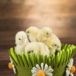 Yellow Easter chickens in a colorful basket with f...