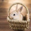 Easter rabbit in the basket...