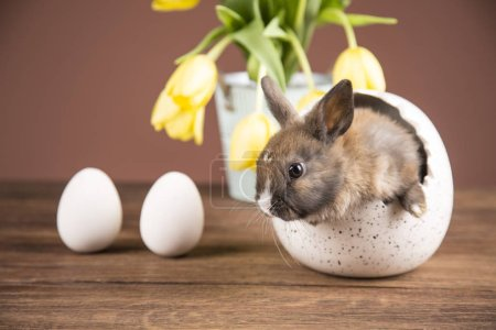 Easter rabbit in the shell of eggs. Yellow tulips....