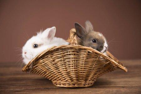 Easter rabbits in a wilkin basket...