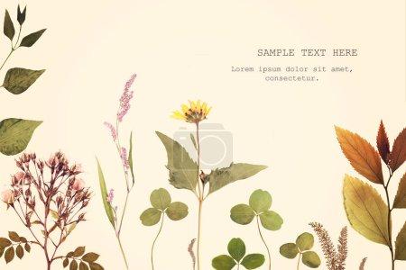 Marco de rama de hierbas floral en bacground blanco