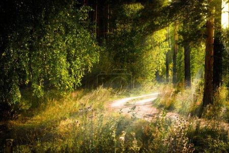 Photo pour Magique paysage forestier d'automne ensoleillé. Rayons de soleil lumineux le matin . - image libre de droit