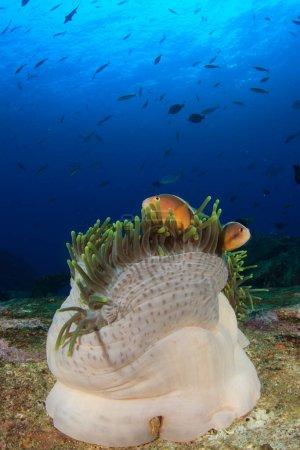 Photo for Marine inhabitants with underwater scene in deep blue ocean - Royalty Free Image