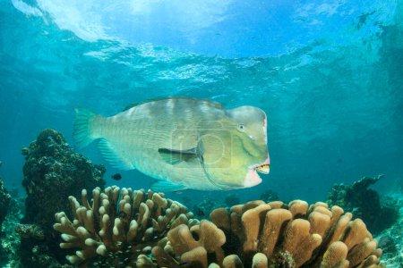 Photo pour Des poissons géants au fond de l'océan - image libre de droit