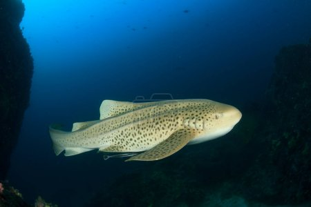 Photo for Huge sea fish in the depth of the ocean - Royalty Free Image