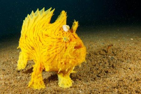 Photo pour Énorme poisson de mer jaune dans la profondeur de l'océan - image libre de droit