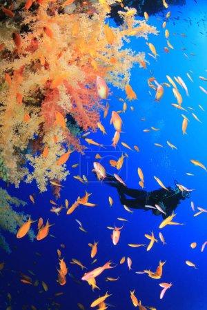 Foto de Foto submarina de buzo en la profundidad del mar azul - Imagen libre de derechos