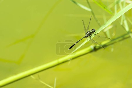 Photo for Dragonfly close up shot on a green background - Royalty Free Image