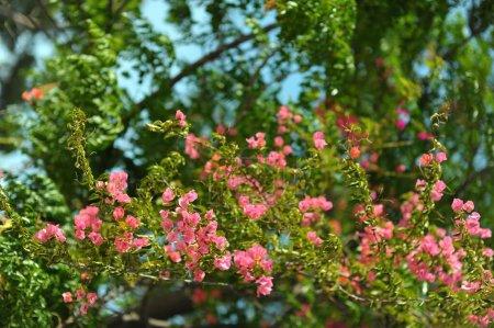 Photo pour Beau fond naturel de jardin vertical avec feuille verte tropicale - image libre de droit