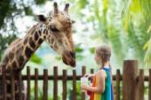 """Постер, картина, фотообои """"Семья кормления Жираф в зоопарке. Дети питаются Жирафы в тропических сафари-парка во время летних каникул в Сингапуре. Дети смотреть животных. Маленькая девочка, вручающая плоды диких животных"""""""