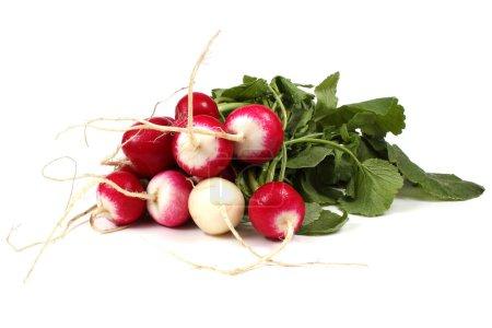 Photo pour Gros plan de radis frais mûr - image libre de droit