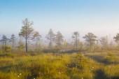 Foggy morning at Yelnya swamp, Belarus
