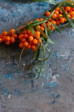 Photo for Close up view of twig of sea buckthorn berries on dark background - Royalty Free Image