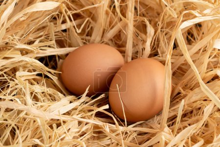 Photo for Eggs in the nest on a grey background copy space, top view - Royalty Free Image