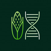 DNA with Corn vector colored linear icon or symbol