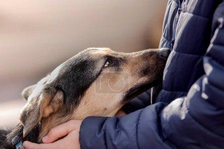 Photo pour Homme caressant un chien errant - image libre de droit