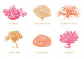 Vector illustrations of color corals Collection of drawn sea polyps on white background
