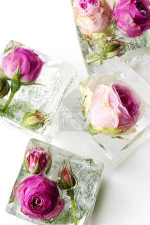 Photo for Frozen rose in ice cube - Royalty Free Image