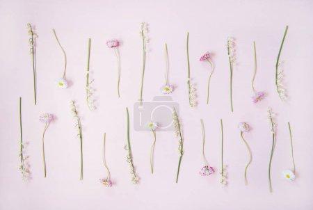 Photo pour Présentation florale printanière. Plat-couche de lis de la vallée et de fleurs de marguerite en rangées sur fond rose poudre pastel, vue de dessus. Fond floral, texture ou papier peint - image libre de droit